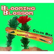 Fiore che sboccia Blooming blossom